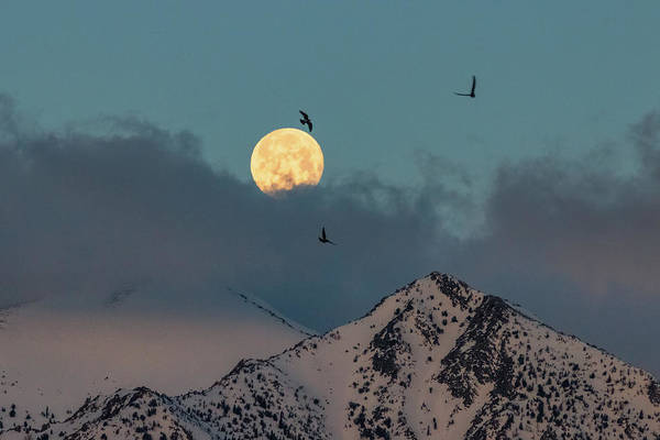 Wall Art - Photograph - Birds Flying Into A Morning Moonset by Mike Herron