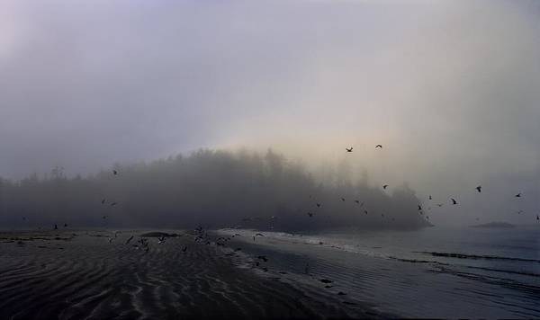 Trees In Fog Photograph - Birds Flying Over Foggy Beach by Gillham Studios