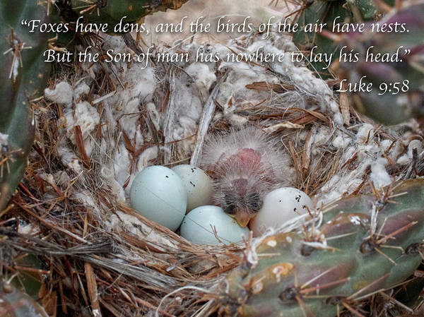 Photograph - Birds Have Nests by Mary Lee Dereske
