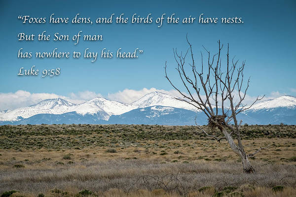 Photograph - Birds Have Nests - Mountain Scene by Mary Lee Dereske