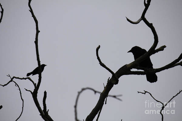 Photograph - Birds Having A Chat by Donna L Munro
