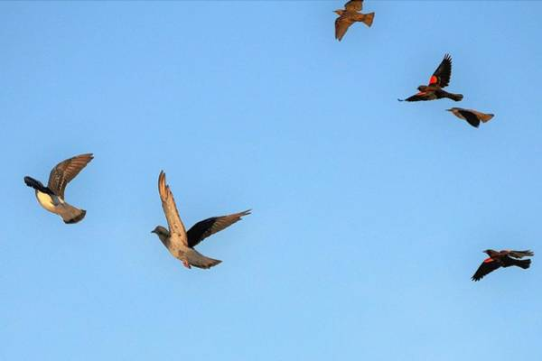 Photograph - Birds In Flight by Kim Bemis