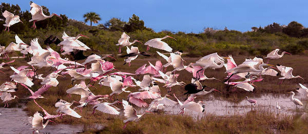 Photograph - Birds In Flight Mug Shot by John M Bailey