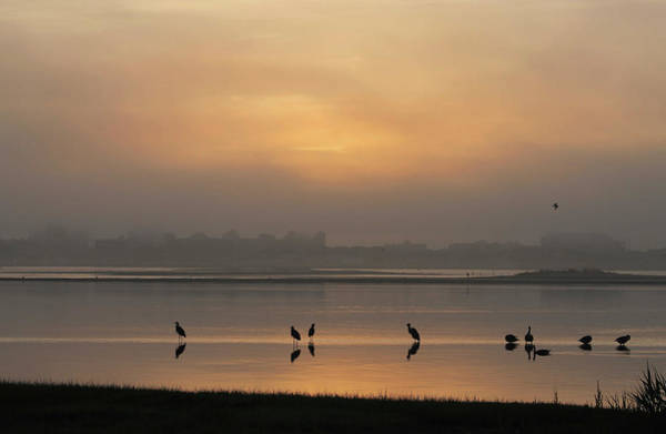 Photograph - Birds In The Bay by Robert Banach