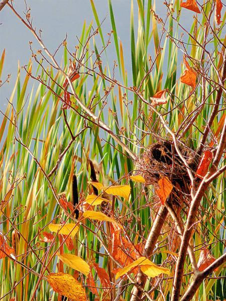 Empty Nest Wall Art - Painting - Bird's Nest 2 by Jeelan Clark