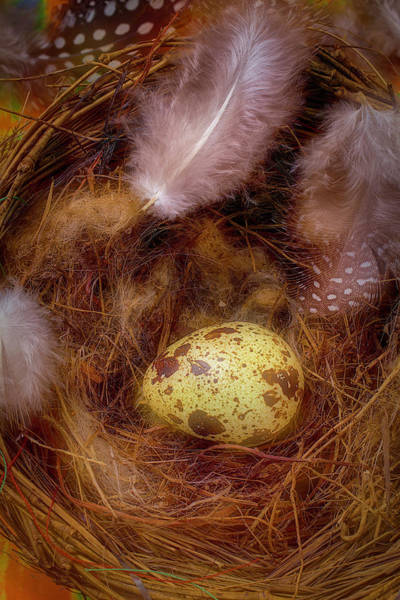 Birds Eggs Photograph - Birds Nest by Garry Gay