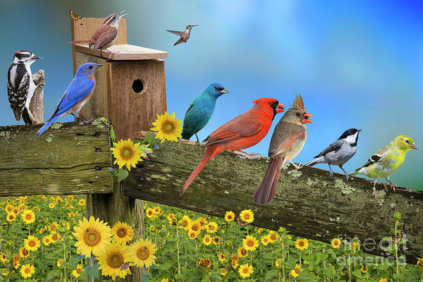 Wall Art - Photograph - Birds Of A Feather by Bonnie Barry