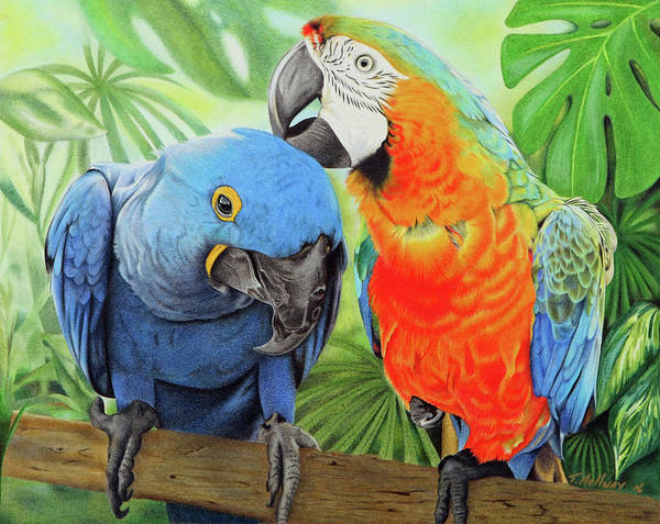 Blue Parrot Drawing - Birds Of A Feather by Terry Mellway