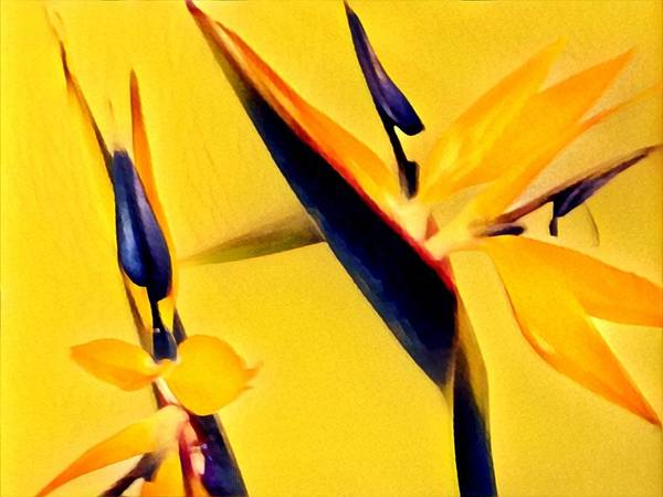 Birds Of Paradise - Two In Gold Art Print