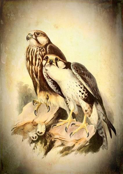 Mixed Media - Birds Of Prey 3 by Charmaine Zoe