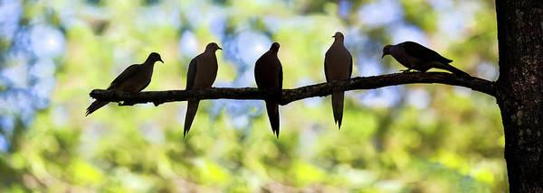 Photograph - Birds On A Limb Silhouette 2016 01 by Jim Dollar