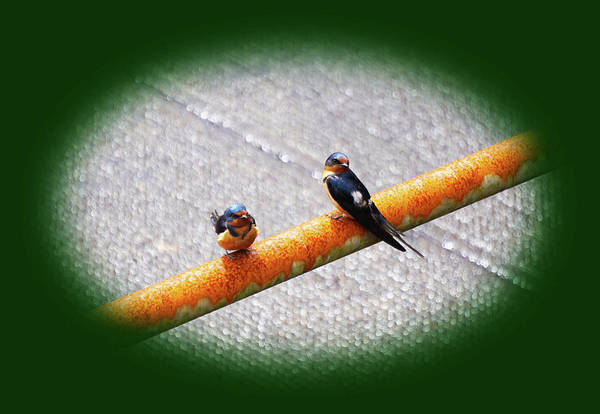 Wall Art - Photograph - Birds On A Pipe by Angi Parks
