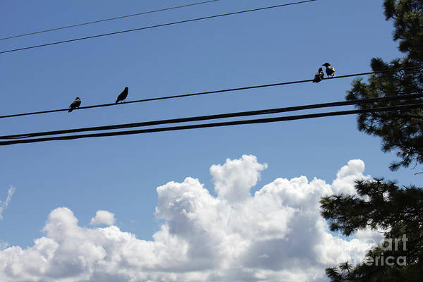 Photograph - Birds On A Wire by Donna L Munro