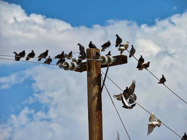 Photograph - Birds On A Wire by Judy Kennedy