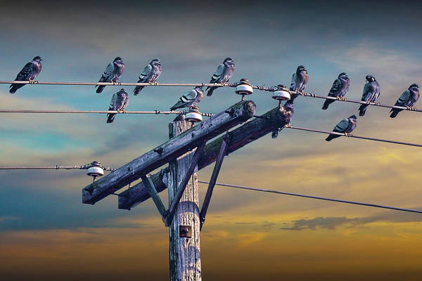 Photograph - Birds On A Wire by Randall Nyhof