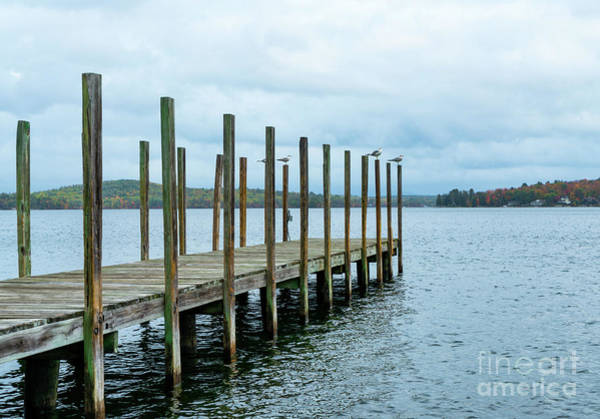 Wall Art - Photograph - Birds On Lake Winnipesaukee by DAC Photo