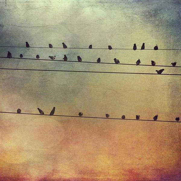 Wall Art - Photograph - Birds On The Lines #stackablesapp by Joan McCool