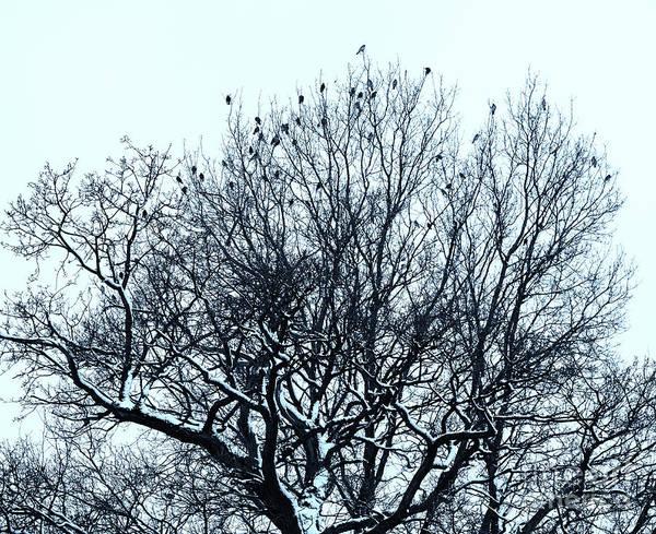 Photograph - Birds On The Tree Monochrome by Marina Usmanskaya