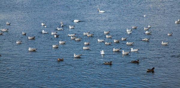 Wall Art - Photograph - Birds On The Water by Gabriela Insuratelu