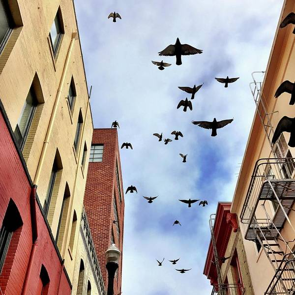 Wall Art - Photograph - Birds Overhead by Julie Gebhardt