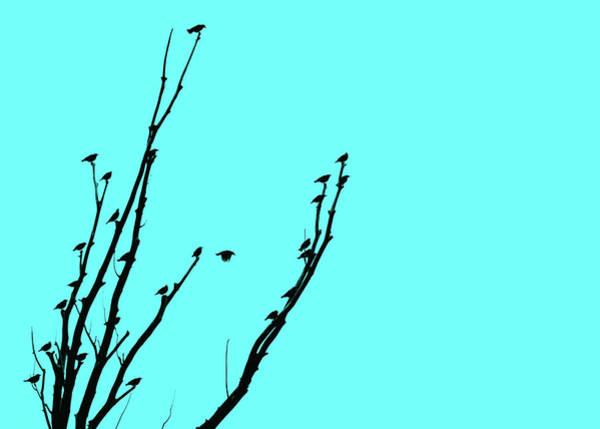Wall Art - Photograph - Birds Silhouette Aquamarine by Jennie Marie Schell