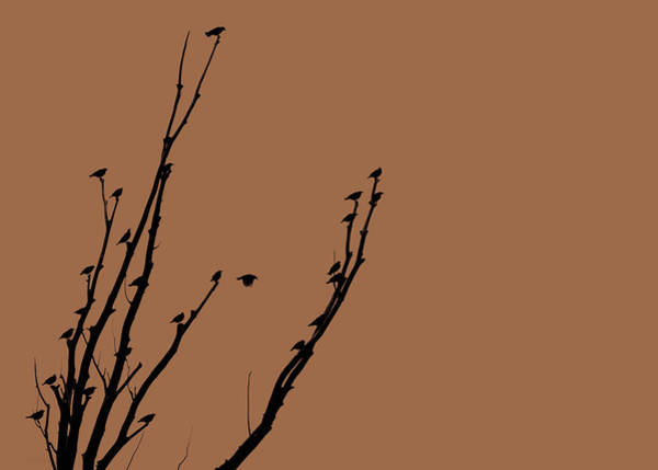 Wall Art - Photograph - Birds Silhouette Brown by Jennie Marie Schell