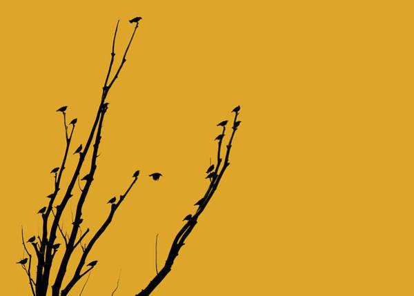 Wall Art - Photograph - Birds Silhouette Golden by Jennie Marie Schell