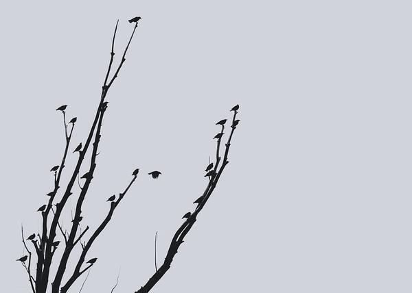 Wall Art - Photograph - Birds Silhouette Gray by Jennie Marie Schell
