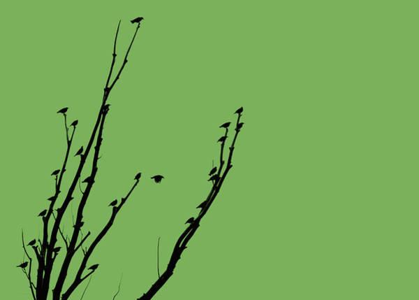Wall Art - Photograph - Birds Silhouette Green by Jennie Marie Schell