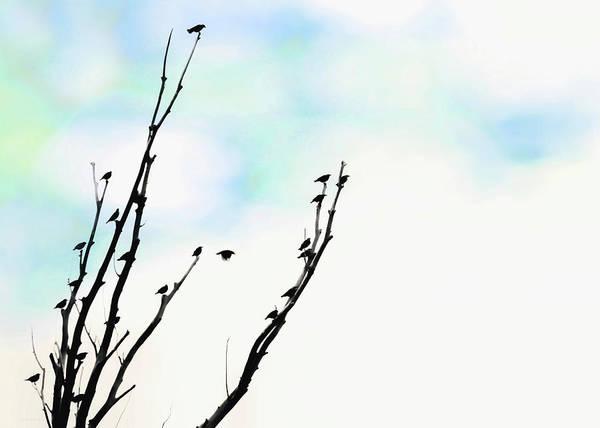 Wall Art - Photograph - Birds Silhouette In Tree Blue by Jennie Marie Schell