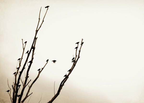 Wall Art - Photograph - Birds Silhouette In Tree Brown by Jennie Marie Schell
