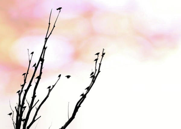 Wall Art - Photograph - Birds Silhouette In Tree Pink Sky by Jennie Marie Schell