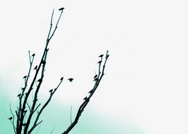 Wall Art - Photograph - Birds Silhouette In Tree Teal by Jennie Marie Schell