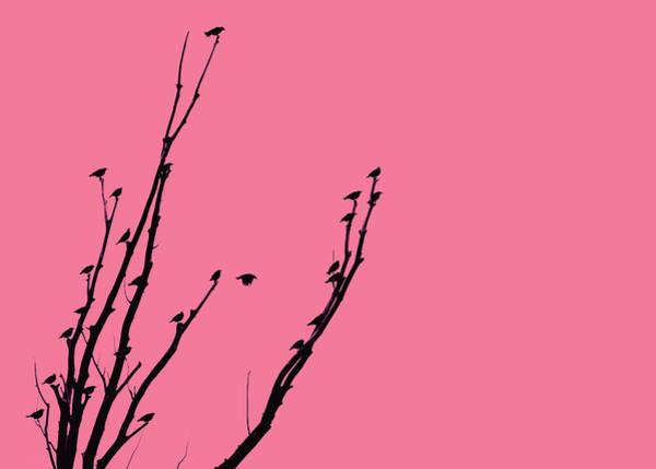 Wall Art - Photograph - Birds Silhouette Pink by Jennie Marie Schell
