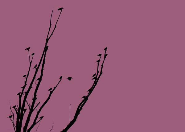 Wall Art - Photograph - Birds Silhouette Plum by Jennie Marie Schell