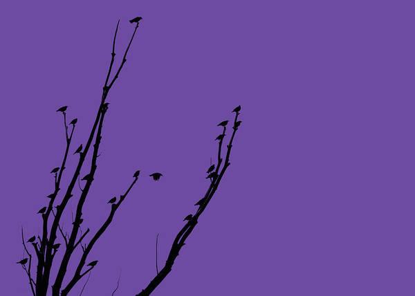 Wall Art - Photograph - Birds Silhouette Purple by Jennie Marie Schell