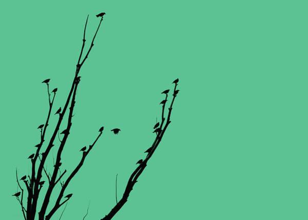 Wall Art - Photograph - Birds Silhouette Teal by Jennie Marie Schell