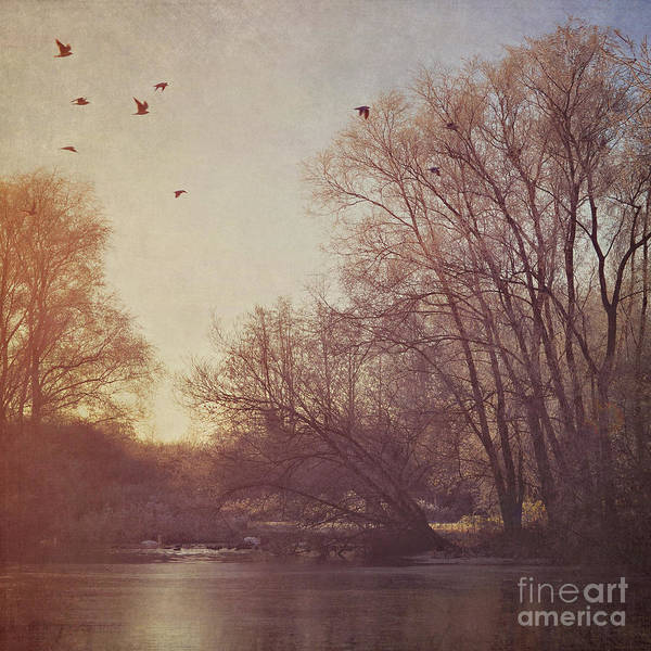 Wall Art - Photograph - Birds Take Flight Over Lake On A Winters Morning by Lyn Randle