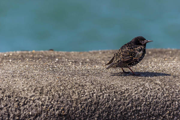 Twitcher Wall Art - Photograph - Birdy. by Angela Aird