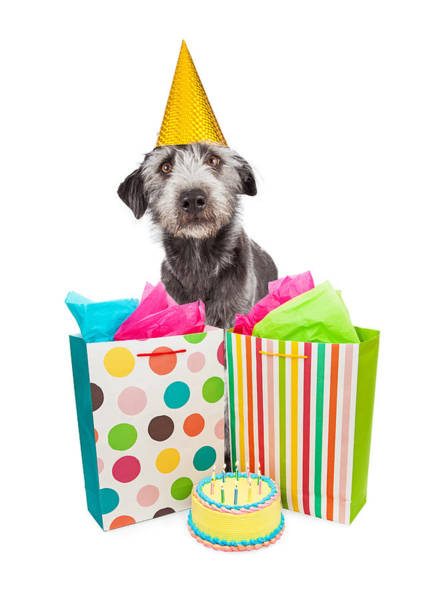 Wall Art - Photograph - Birthday Party Dog Presents And Cake by Susan Schmitz