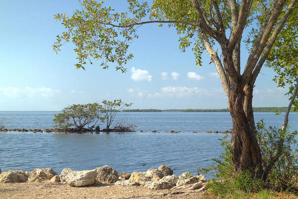 Photograph - Biscayne National Park-2 by Rudy Umans