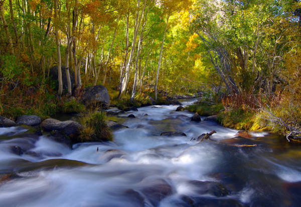 Photograph - Bishop Creek In Fall Eastern Sierra Photograph by Frank Lee Hawkins Eastern Sierra Gallery