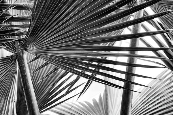 Wall Art - Photograph - Bismarck Palm Fronds by Tim Gainey