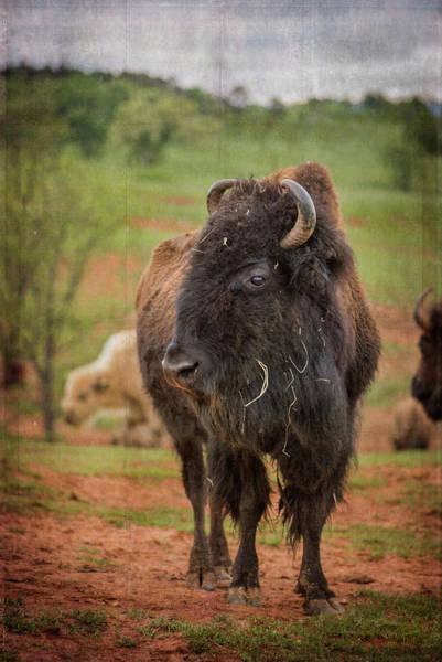 Photograph - Bison 5 by Joye Ardyn Durham
