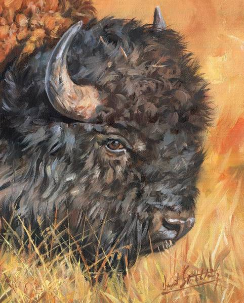 North American Wildlife Wall Art - Painting - Bison by David Stribbling