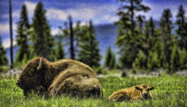 Painting - Bison-dwp1095282 by Dean Wittle