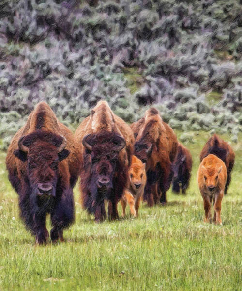 Painting - Bison - Dwp15818951 by Dean Wittle