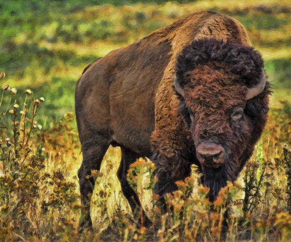 Painting - Bison-dwp526805 by Dean Wittle