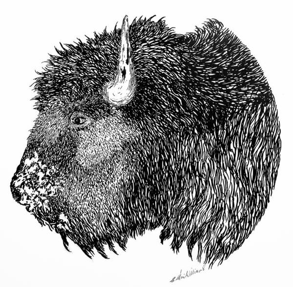 Drawing - Bison by E Colin Williams ARCA