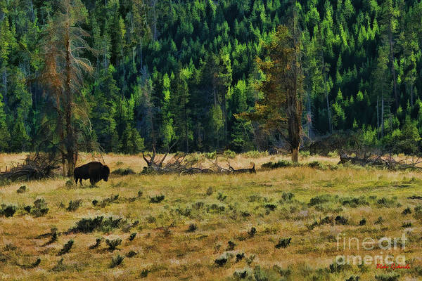 Photograph - Bison Evening by Blake Richards